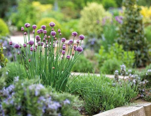 Top 5 Tips For Gardening In Spring